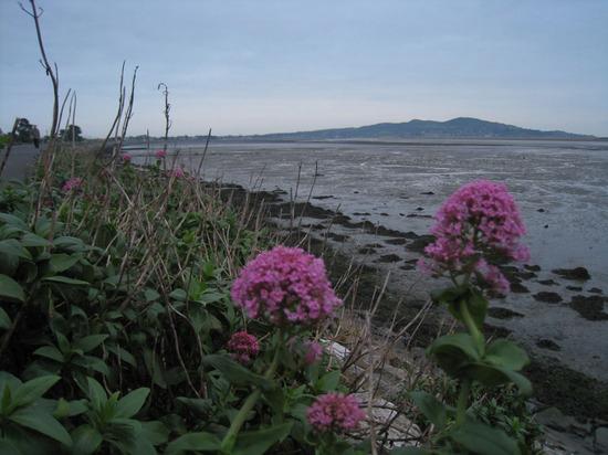 143_flowers_dublin_bay.jpg
