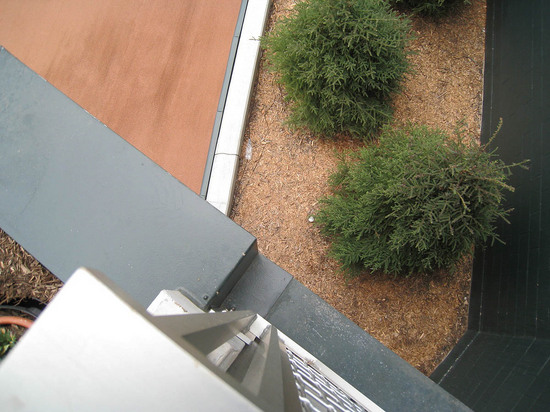 15_ball4429_in_trees.JPG