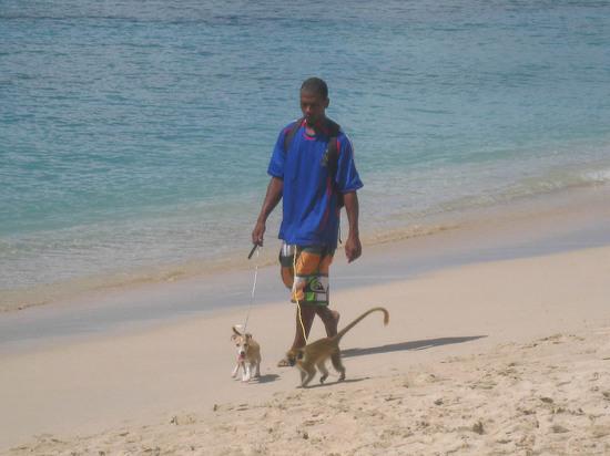 319_guy_walking_a_monkey.JPG