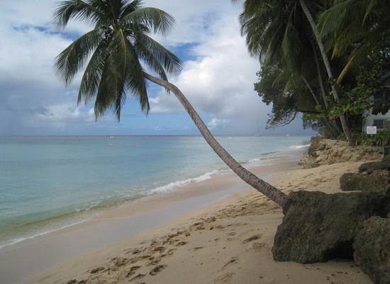 71_leaning_palm_tree.JPG