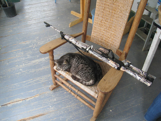 22_cat_and_gun.JPG