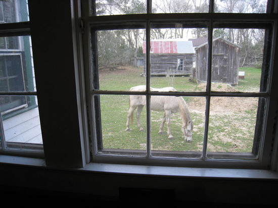 24_horse_out_the_window.JPG