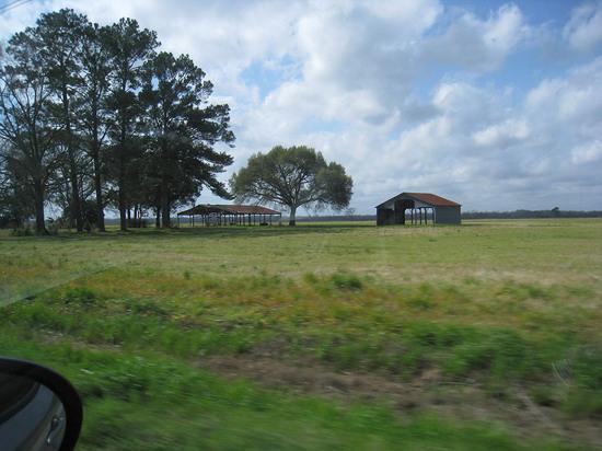 44_louisiana_countryside.JPG