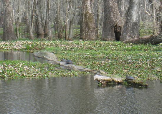 49_turtles.JPG