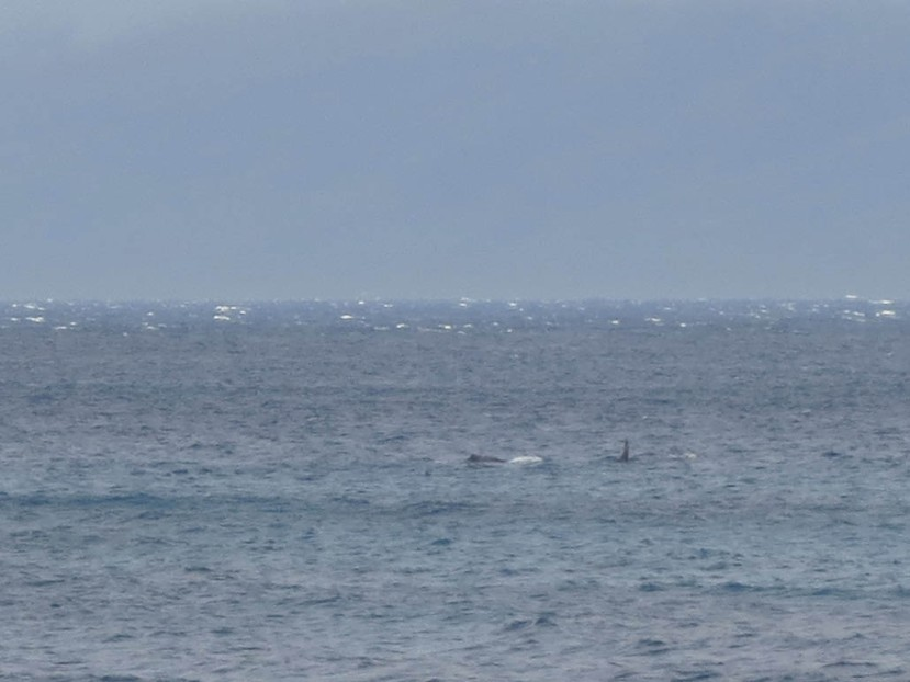 222_whales_seen_from_condo