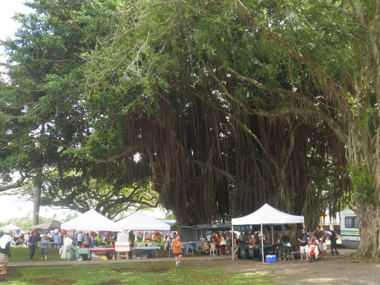523_awesome_tree_and_farmers_market