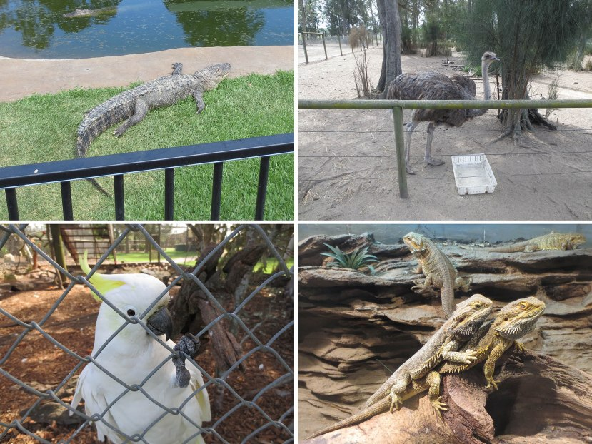 132_crocodile_ostrich_cockatoo_lizards