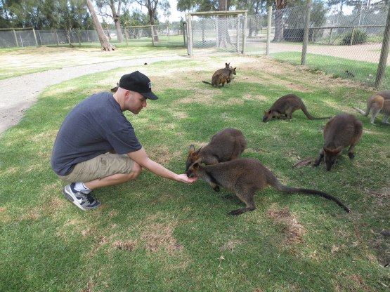 171_zack_feeding_wallabies