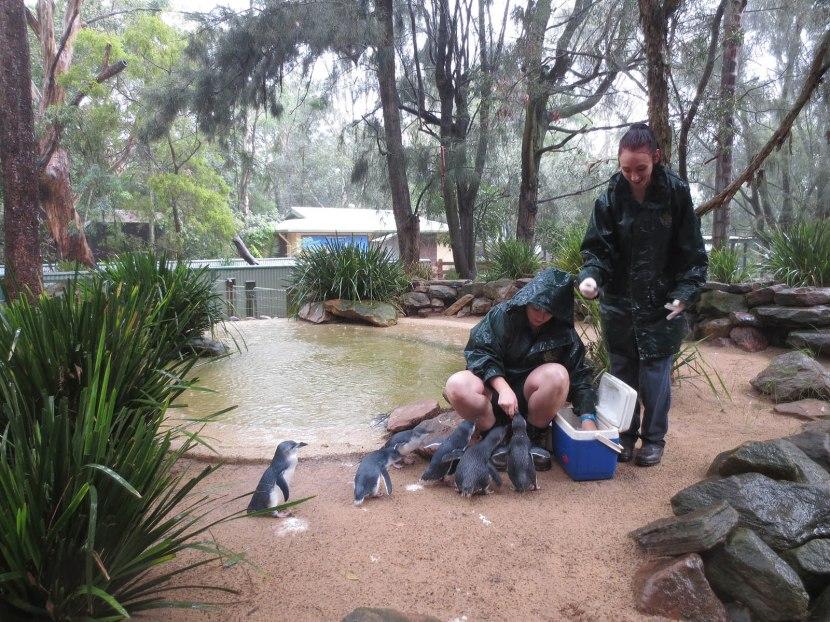 503_penguins_feeding_time