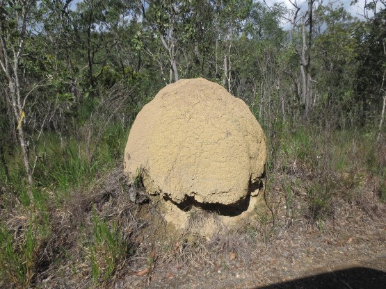 600_termite_mound_on_the_way_to_our_next_stop