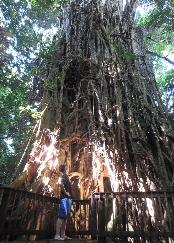 619_zack_and_800_year_old_tree