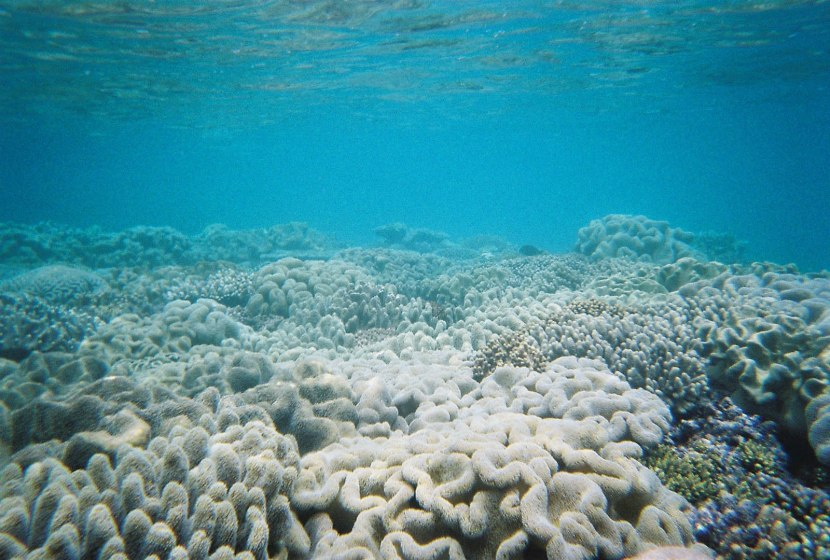 690_great_barrier_reef_coral