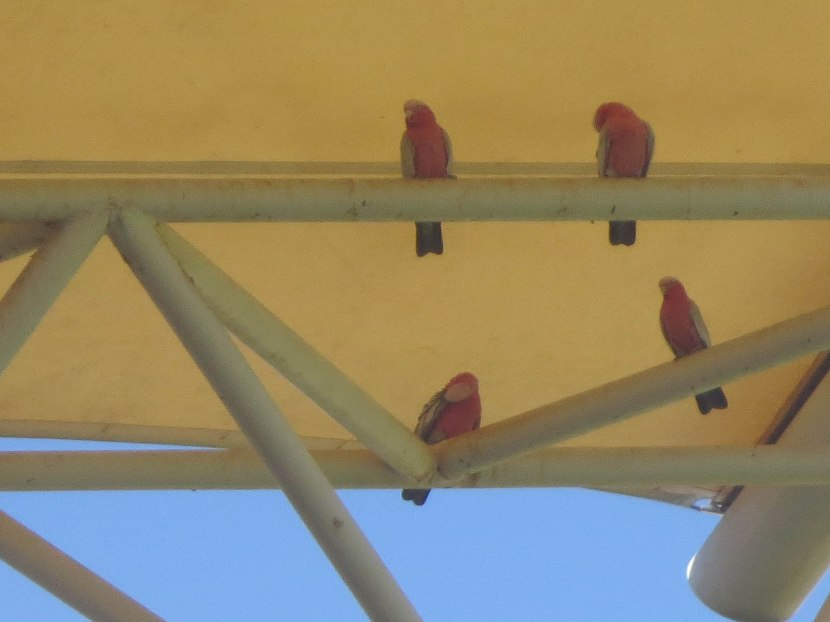 885_pretty_birds_under_the_awning