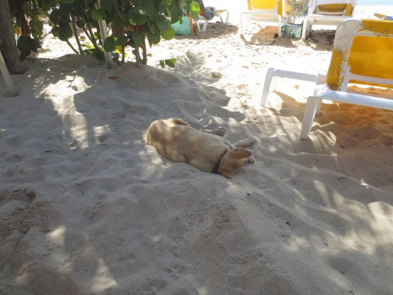 114_dog_sleeping_in_the_sand