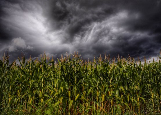 5_corn_field_and_stormy_sky_photographed_by_brandon_sloter
